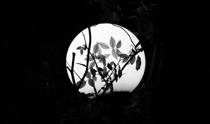 tôi yêu trăng