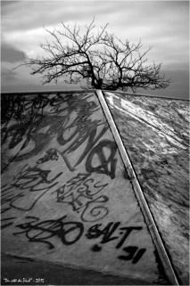 BLOG-DSC_33798-tag piste skate board et arbre au couchant N&B1