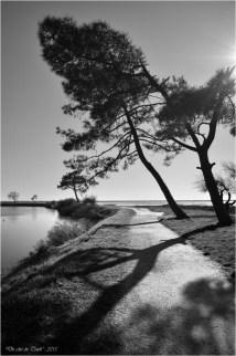 BLOG-DSC_34097-pins sentier littoral Cassy N&B