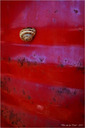 blog-p7280171-escargot-fut-rouge.jpg