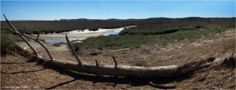 BLOG-P4128701-03-tronc de pin prés salés Arès