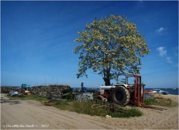 BLOG-P5099118-tracteur Grand Piquey