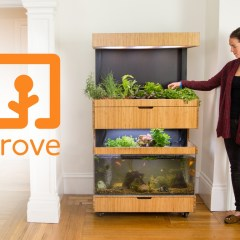 Fish Tank Garden – Grow Fresh Food All Year Round