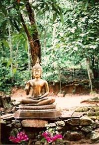 buddhaforest