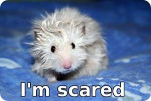 scared-hamster