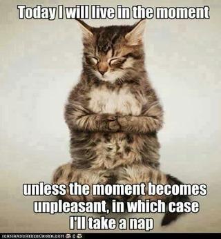 Mindful Kitty