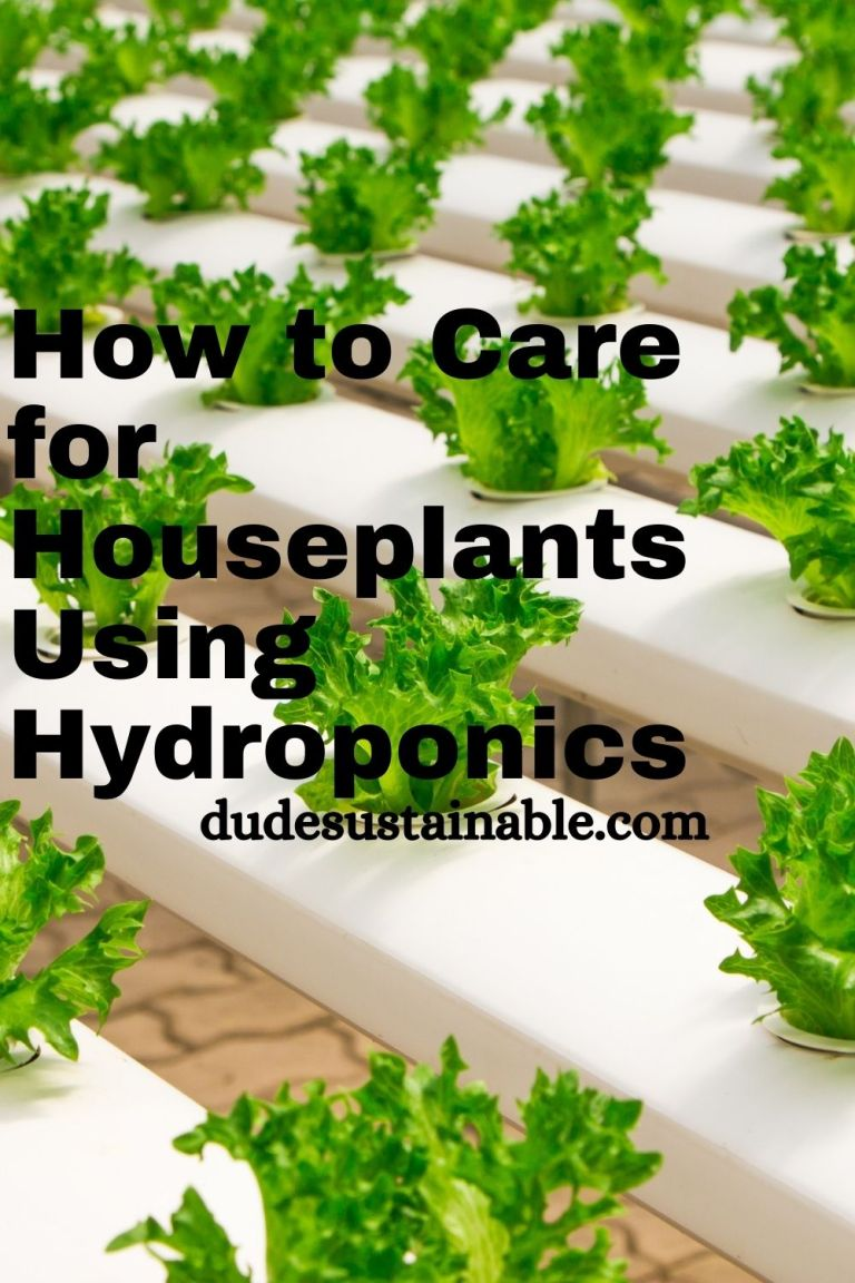 How to Care for Houseplants Using Hydroponics