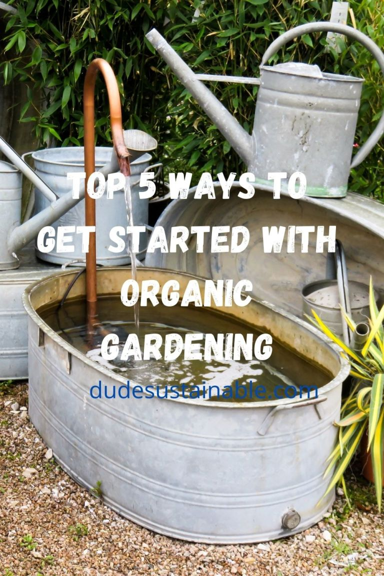 Top 5 Ways to Get Started With Organic Gardening