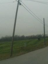 Bent Telephone Pole Outside New Albany, Indiana