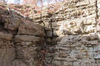Clifty Falls State Park Roots and Rocks