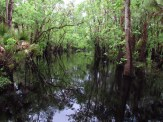 Reflection on Crabgrass Creek in the Bull Creek Wilderness Management Area