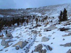 Guyot Flat in the Inyo National Forest