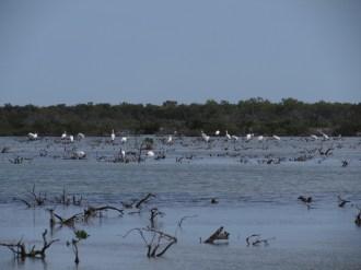 Ibis in the Florida Keys