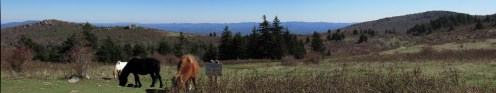 Massie- Gap-Grayson-Highlands-Ponies-Panorama-Small-File