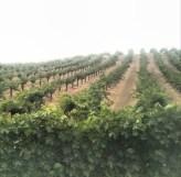 Winery in Napa Valley, California