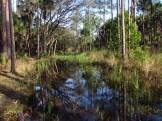Standing Water in Orlando Wetlands Park