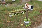 Tom's Festive Gourds for Halloween in Chesterhill, Ohio