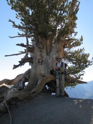 Wally Waldron Tree on Top of Mount Baden Powell