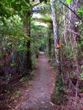 Massey Track in the Hunua Ranges