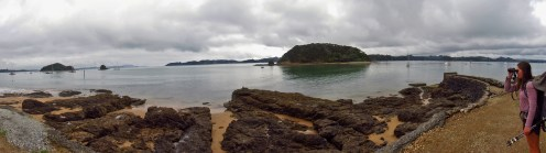 Nuthatch in Paihia Panorama