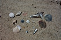 Collection of Shells on the Beach in Waipu