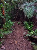 Mud on the Wairoa Cosseys Track in the Hunua Ranges