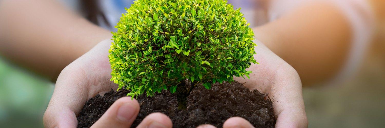 Certification des boîtes éco-durables FSC