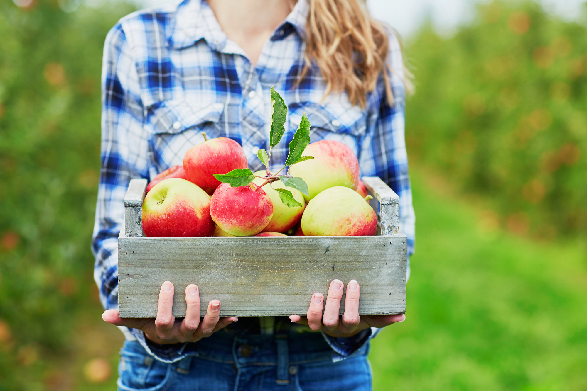 Five Of The Best Apple Orchards in North Carolina