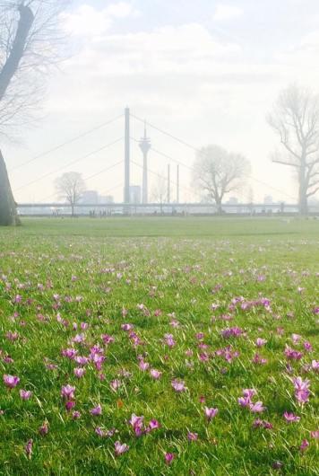 Spring in Duesseldorf