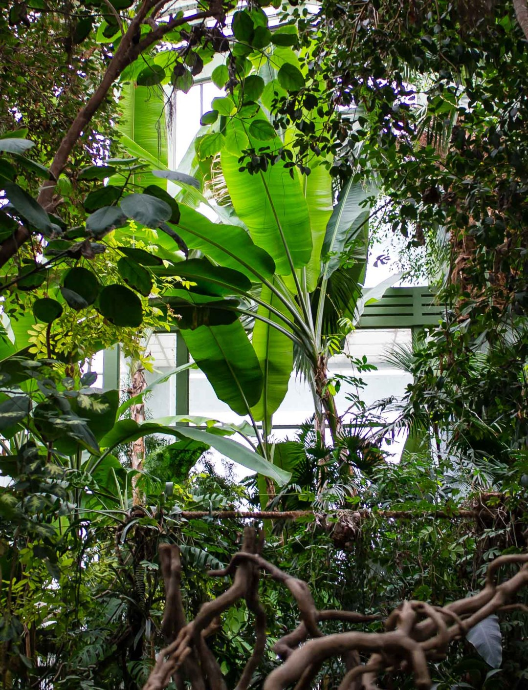 Les Grandes Serres (Grand Greenhouses & Botanical Garden)