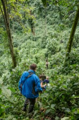 Bwindi Impenetrable Forest