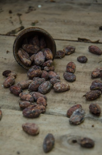 Roasting cacao beans on a chocolate tour, Costa Rica