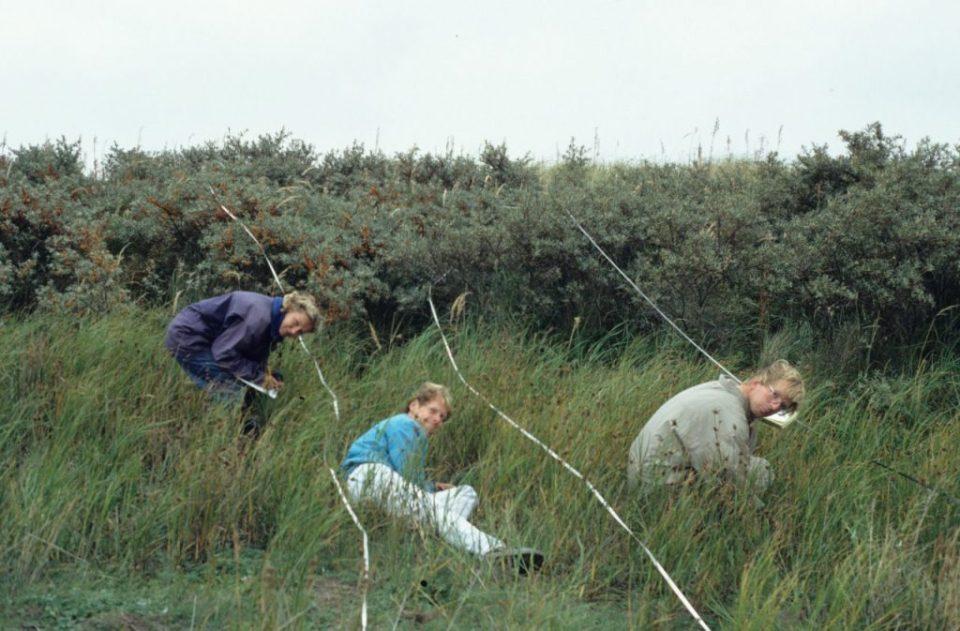 1. September 1989. Opnemen van het proefvlak.