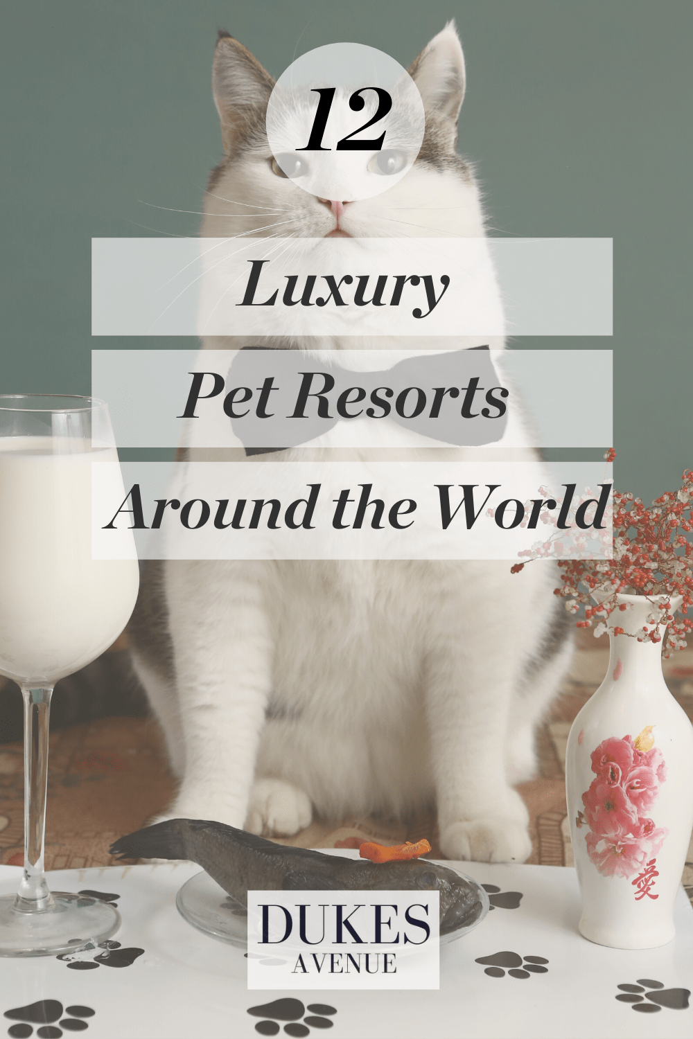 Luxury Pet Resorts Around the World