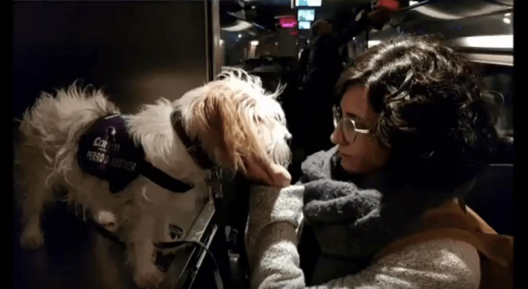 ACCESIBILIDAD: Viajar con un perro de Alerta Médica