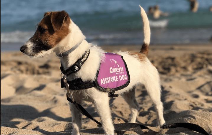 Los perros de alerta médica de CANEM: ¿Por qué Jack Russell?