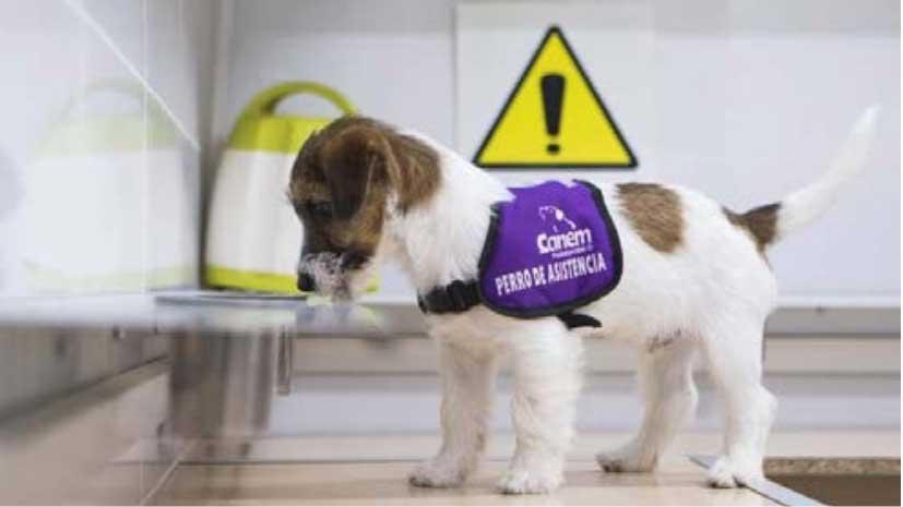 Sobre los perros de detección del COVID-19