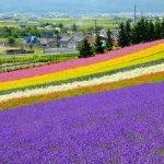 Điểm đến lý tưởng cho chuyến đi du lịch Nhật Bản