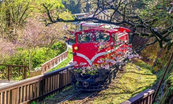 Ngắm hoa anh đào khoe sắc và trải nghiệm hoạt động hấp dẫn ở Đài Loan vào xuân