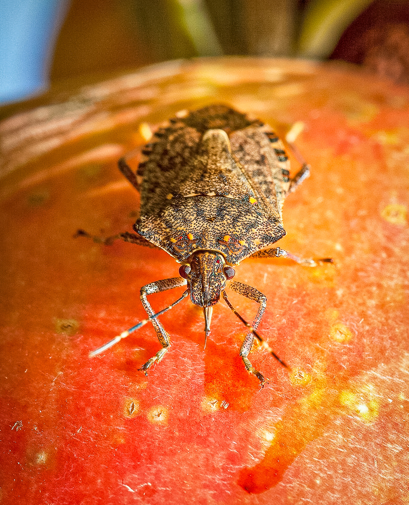 Integrated Pest Management for Orchards at the Duluth Folk School