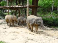Baby elephants attached! bit sad