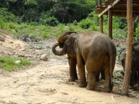 Baby elephants feeding each other! aw
