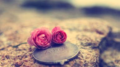 Love Rose Flower Wallpaper