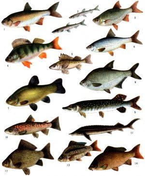 Корма для промысловых рыб