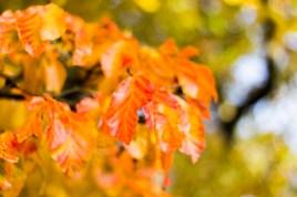 Farben des Herbstes II