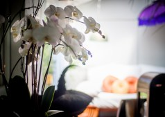 Year-round orchids