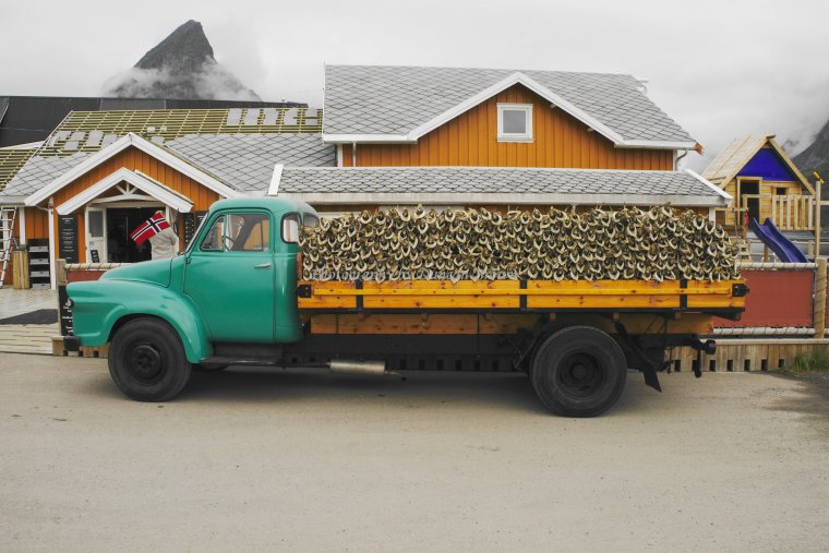Cod loaded onto a truck, Sakrisøy Island, Lofoten Archipelago, Norland County, Norway - ...behind every picture, there is a story...