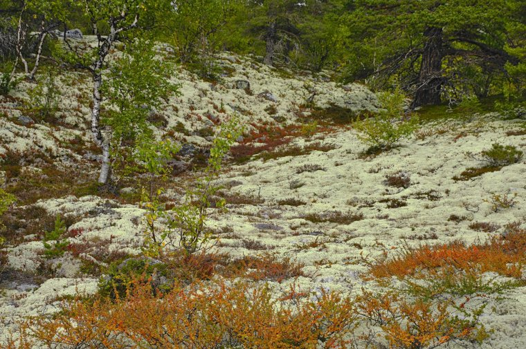 Lichen carpet, Rondane National Park, Innlandet County, Norway - ...behind every picture, there is a story...