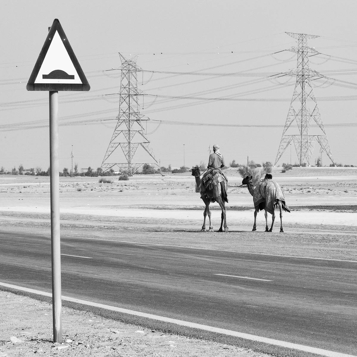 Two camels pass a sign warning of humps in the road, Dubai, UAE
