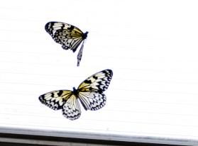 Butterflies - Chester Zoo
